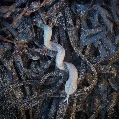Plastic snake