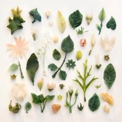 Plastic plants found on Cornish beaches