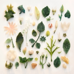 Plastic plants found on Cornish beaches