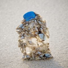 Plastic bottle with goose barnacles