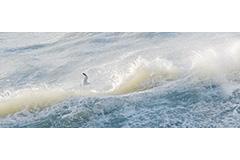 Single Gull Wavecrest 2:5