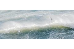 Two Gulls Wavecrest 2:5
